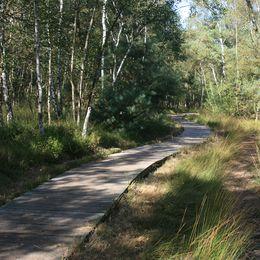 Bohlenweg im Naturschutzgebiet Venner Moor in Senden