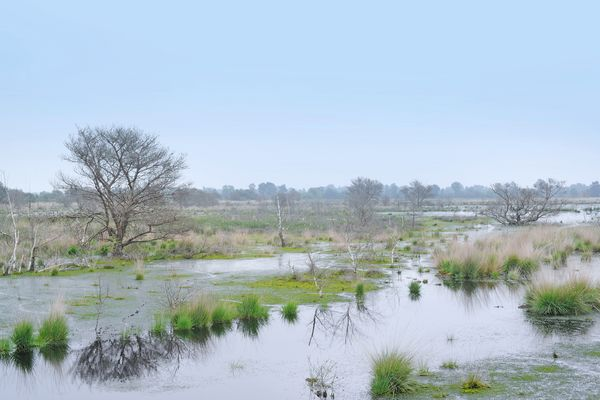 Dalum-Wietmarscher Moor