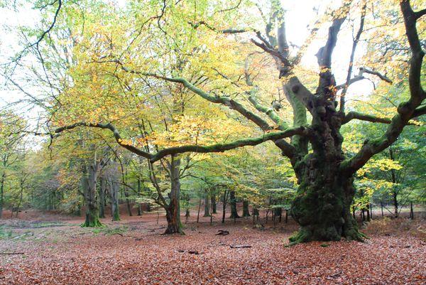 Naturschutzgebiet Tinner Loh, Blick auf Wald mit urwüchsigen und alten Buchen