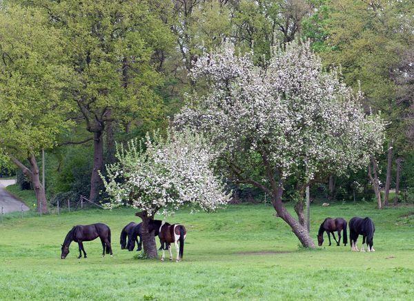 Pferde auf einer Weide in Lengerich