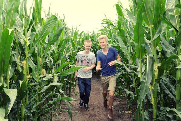 Jungs laufen durch Maislabyrinth