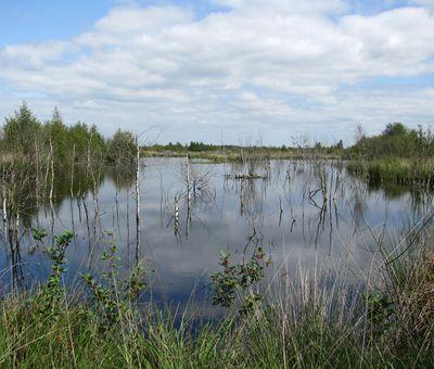 Moorlandschaft im Bargerveen