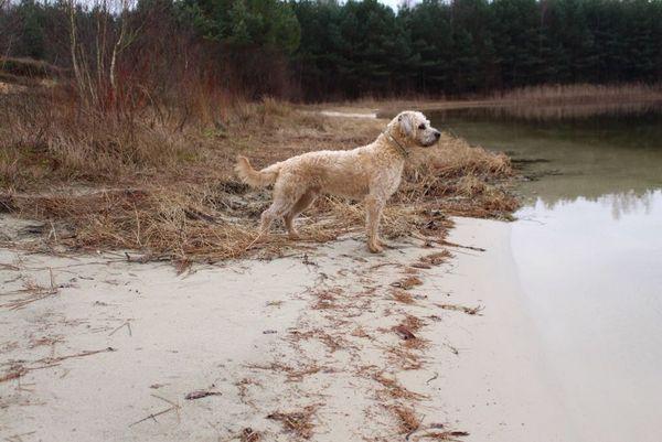 Hund am Dankernsee in Haren (Ems)